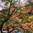 11月12日 楢葉町~川内村~小野町~いわき市ドライブ