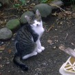 「大切な 命が大事 野良ちゃんよ」 ホームレス猫川柳