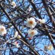 少しずつ春めいています