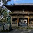 室戸岬  最御崎寺への道 タイキンギク、キバナアマ       2018.11.24.(5)