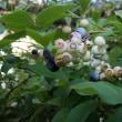 我が家の庭(7月)