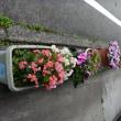 今年の夏の鉢花! upしてもらいました