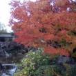モリコロ「日本庭園奥の紅葉」