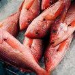 複数の魚類の衛生について警告  EU
