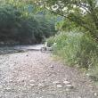川沿いを探索