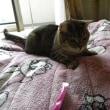 冬のお布団を交換しようと思うとやって来る猫アルアル!