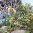 ~冬の窯場の花の様子~
