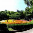 千種公園 百合の花