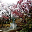町田の古刹「久住山宏善寺」は満開の梅に包まれ!!