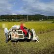 稲刈り日和☀。煮崩れ栗を使って。