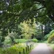 黄葉が多くなった善福寺公園です その2