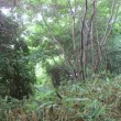 東海大学裏山潜入「山鼻峰」と近隣「藻岩橋」