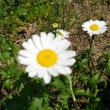 廻るもの 初夏の花たち2