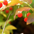 樹木ウォッチング冬から夏へ351アクシバ2