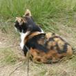 😸猫のプロポーション…多摩川猫シリーズ