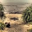 新・アダンの浜辺/パパイアと通信塔 #田中一村  #ややマニアックな奄美