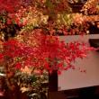 桐生川での紅葉 2017年(その7)、桐生川ダム下流での紅葉