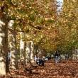 新宿御苑 プラタナス並木