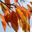 秋色に染まった葉や赤い実