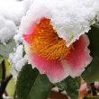 名残り雪・花たち