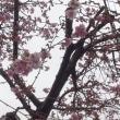 春、近し・おらが春