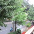 6月20日(水)朝から雨が降り続いています。
