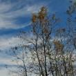 冬の空にスジ雲が綺麗でした。  (Photo No.14123)