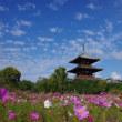 鮮やかなコスモスに飾られる法起寺の塔