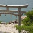 長浜紀行..竹生島(4)
