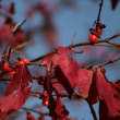 秋の終わり?