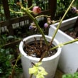 雨、雨、雨ー喜ぶ生物と困っている植物