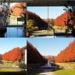 初冬のフランス式庭園(紅色に染まるメタセコイアの並木)