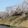 2019年 平成最期のお花見 ソメイヨシノ・枝垂れサクラ / Estrellita
