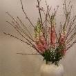 20180303の花