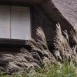 生田緑地で秋を満喫