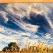 東京の『すごい雲展』と野の花(⋈◍>◡<◍)。✧♡