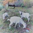 第5回山羊主総会「ヤギのしつけとトレーニング」
