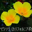 昭和記念公園のはなたち