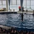 子ども達と水族館へ行って来ました(^-^)