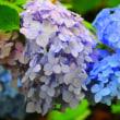 夏至、日本の一番長い日