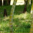 竹の子の季節