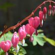 春の花(1)