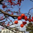 ナナカマドの真っ赤な実