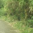 道端の草刈りを。
