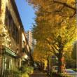 プラチナ通りが黄金色に染まる