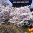 桜を見に行こう!