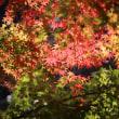 三瀧寺の紅葉2018.11.21