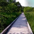 ◆釧路湿原の彩り・・・冷涼な釧路でクールの生活と避暑に・・・・・