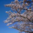 花と空です空倶楽部♪