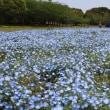 JRウォーキング:「ネモフィラの絨毯を観に行こうin海の中道海浜公園」